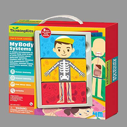 4m body system