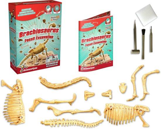 Brachiosaurus Fossil Excavation