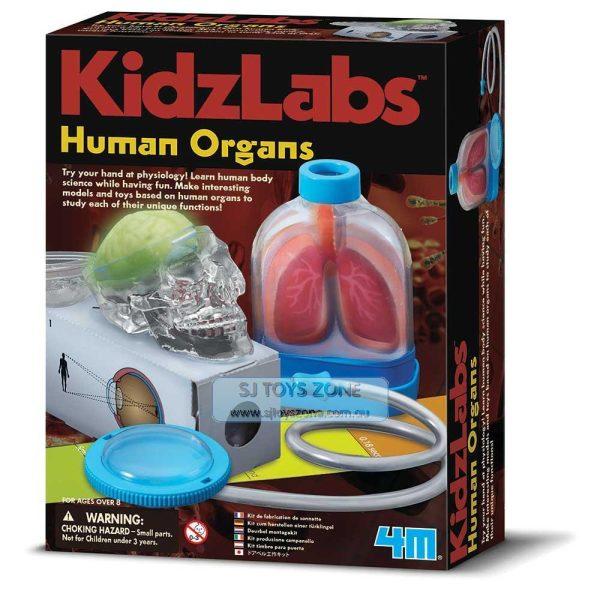 4M-Human-Organs