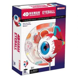 Eyeball Anatomy Model
