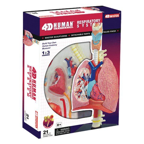 Respiratory System 1:3 Model