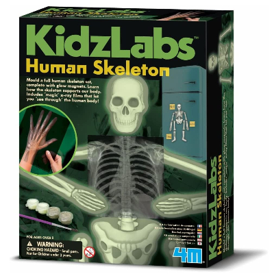 4M - Kidzlabs - Human Skeleton