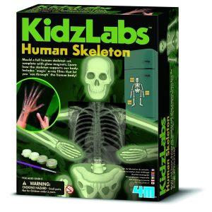 4M - Kidzlabs - Human Skeleton