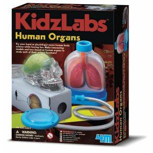 4M Kidzlabs Human Organs