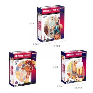 Human Anatomy Multipack