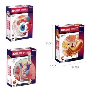 Human Anatomy Model Multipack
