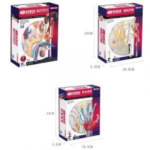 Human Anatomy Toy Multipack
