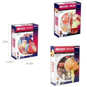Human Anatomy Multipack Toy