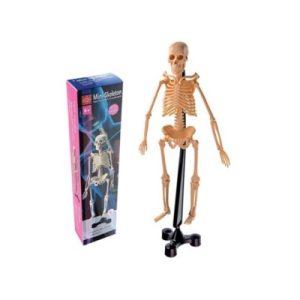 Edu Toys - Mini Skeleton 46cm