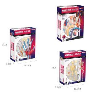 Human Anatomy Multipack - 3